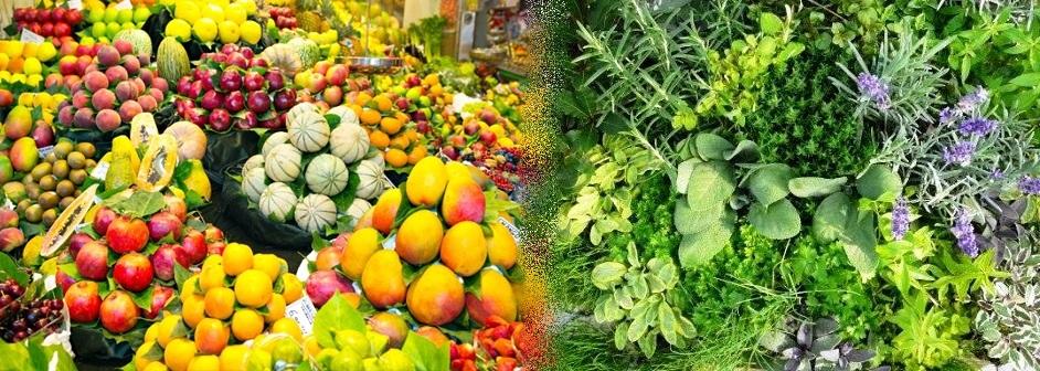 תזונה וצמחי מרפא
